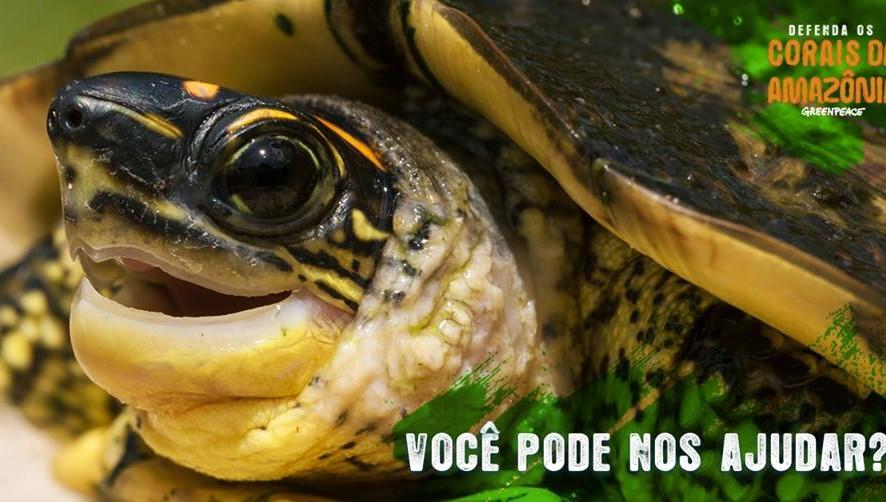 DEFENDA OS CORAIS DA AMAZÔNIA: Um tesouro natural recém-descoberto no fundo do mar